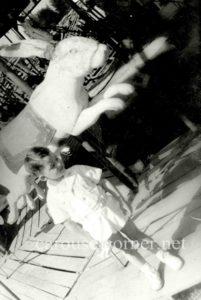 1940s_parker_carousel_rabbit_01
